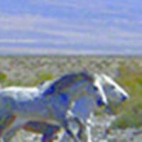 GBIA-horses.jpg